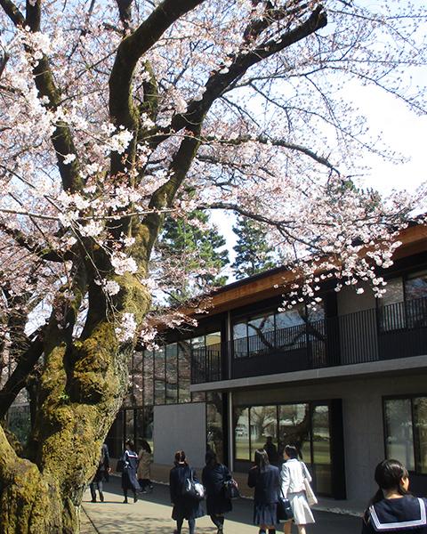 春のイベント写真