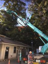 ホーム内樹木の整備ついて